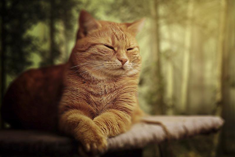 diarrhée du chat causes et traitements