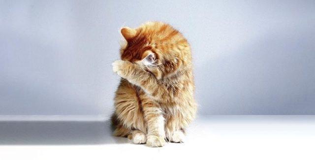 Comment soigner la diarrhée du chat