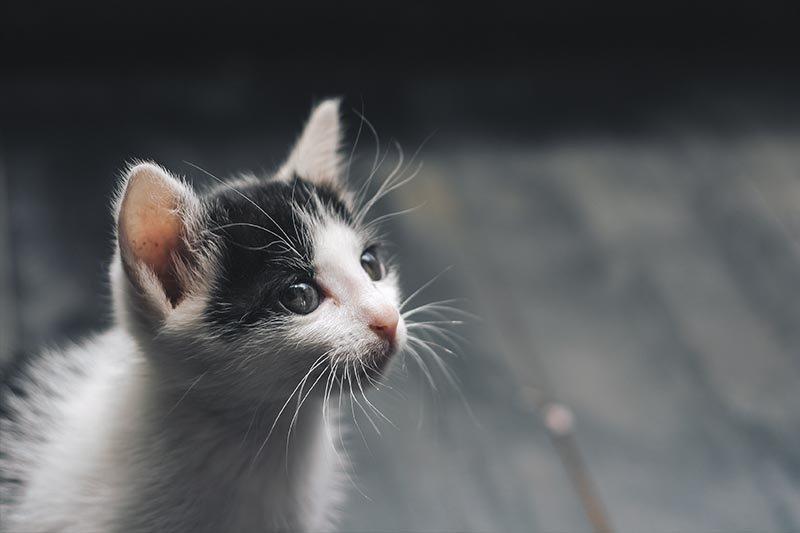 diarrhée du chat symptômes et comment soigner ?