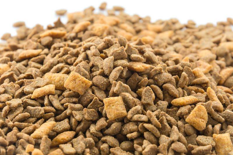 Attention : faire maigrir son chien avec des haricots verts peut s'avérer très dangereux pour sa santé !