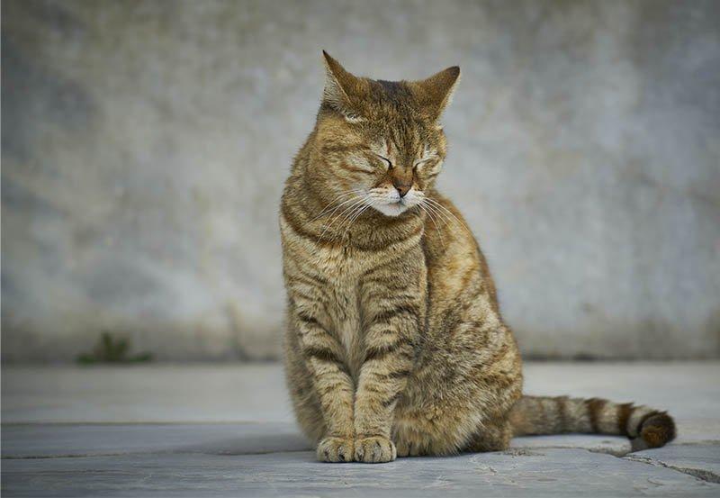 trouver un traitement contre l'insuffisance du chat totalement naturel
