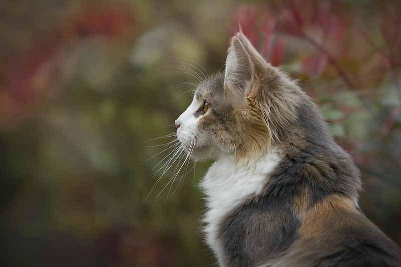 Traitement naturel de la diarrhée du chat