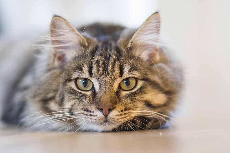 Mon chat a la diarrhée : causes et traitement