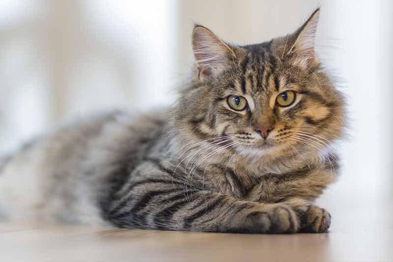 quel médicaments pour la diarrhée du chat