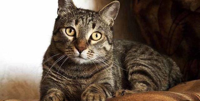 Diarrhée chat traitement