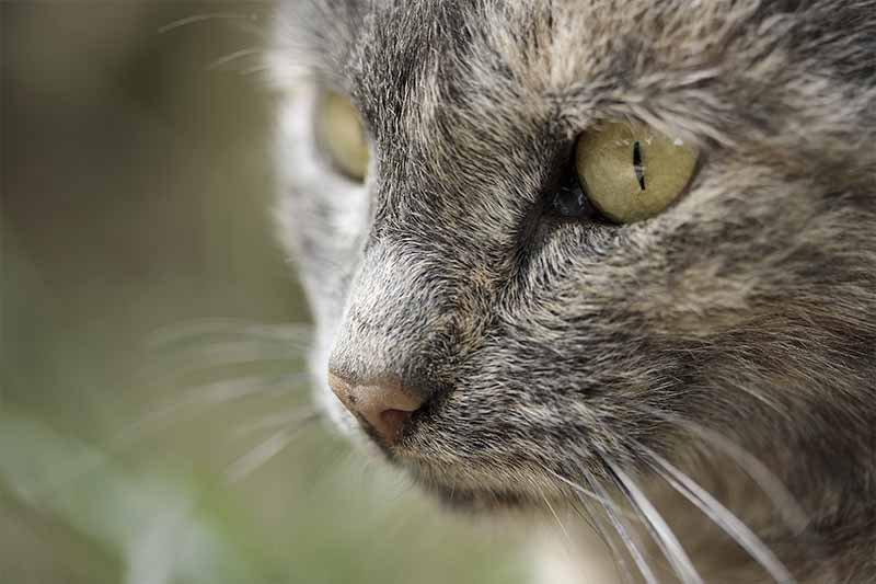 meilleur médicaments contre la diarrhée du chat en pharmacie