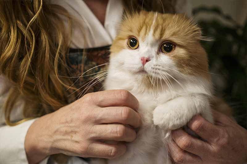Smecta pour chat contre la diarrhée