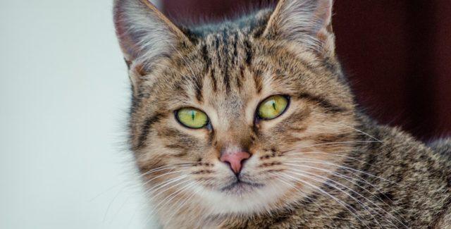Les couleurs des selles du chat peuvent indiquer des soucis de santé