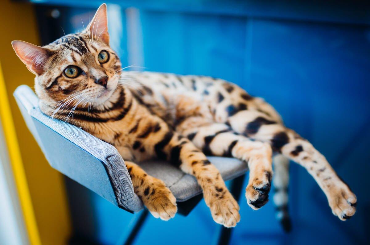 La diarrhée et le vomissement du chat sont un symptôme de gastro-entérite