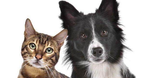 Flagyl pour chat et chien (ou Metrobactin)