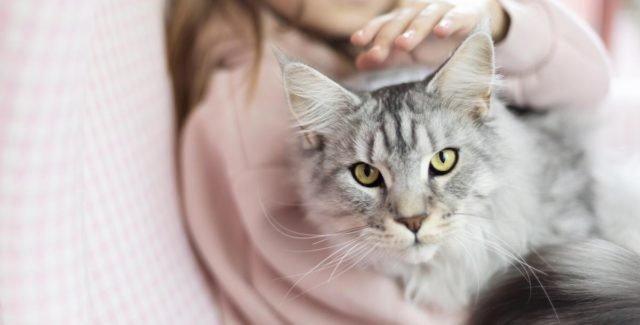 Le Kaopectate pour chat est efficace contre les diarrhées