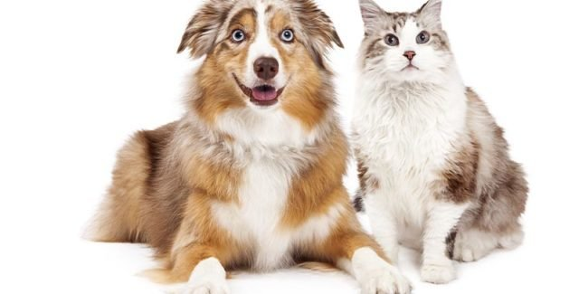Comment utiliser le Milbemax : Ce vermifuge pour chien et pour chat ?