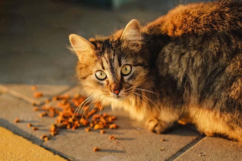 5 critères de qualité pour choisir une croquette premium pour chat