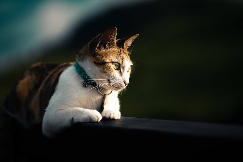 Les critères de qualité alimentaire que les croquettes pour chat senior que vous achetez à votre compagnon doivent respecter