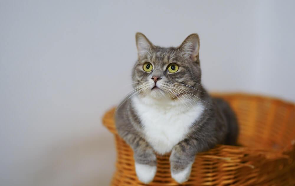 Attention à la composition des croquettes rénales pour chat que vous lui achetez