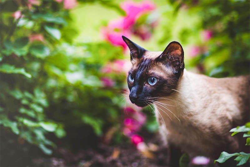 Quelles croquettes vétérinaire pour chat lui choisir ?