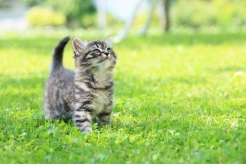 Comment vermifuger un chaton ?