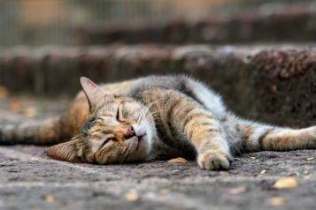Comment bien utiliser le Milpro pour chien ou chat pour le vermifuger ?