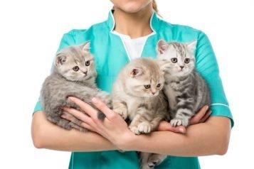 Comment soigner les vers de son chat
