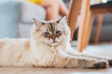 Les effets secondaires des vermifuges pour chat qu'il faut connaître