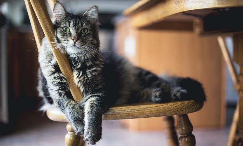 8 origines à pourquoi votre chat boit beaucoup