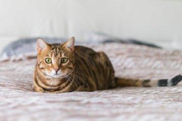 Comment enlever les vers d'un chat : le guide complet
