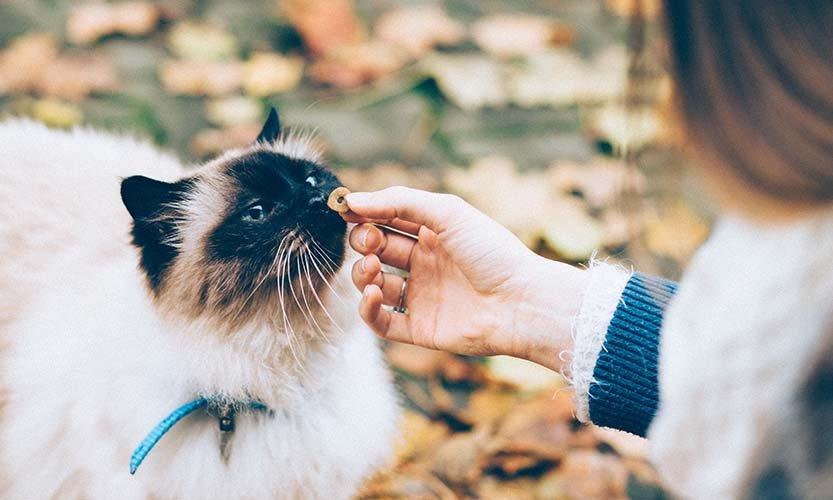 Les symptômes de l'insuffisance rénale chez le chat