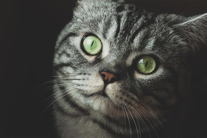 Tout savoir sur les vers ronds du chat, et comment soigner votre compagnon