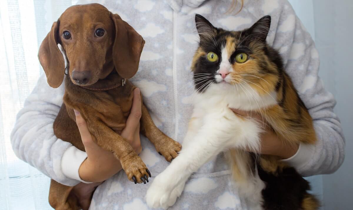 Le Rubel pour chat et pour chien est un complément alimentaire pour traiter l'IRC