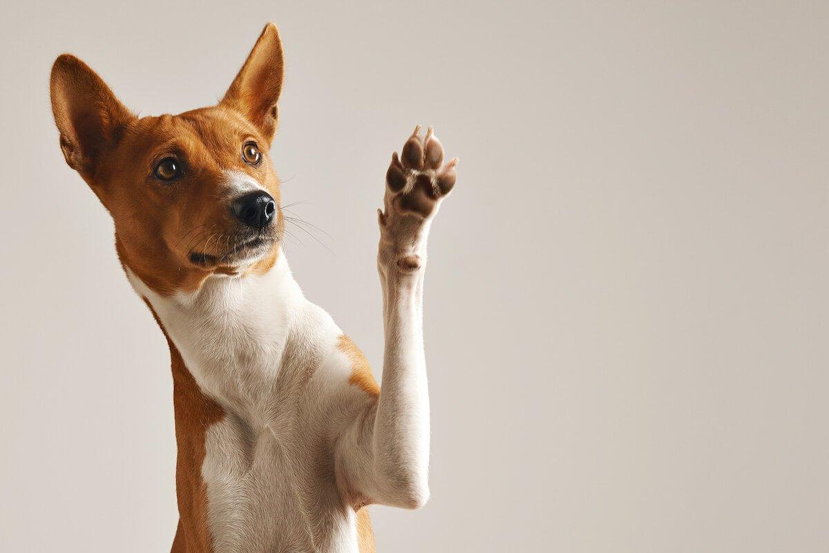 Le guide d'utilisation du Cestem F pour chien