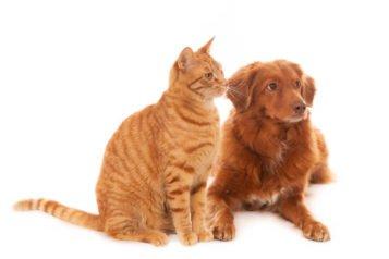 Tout savoir sur le Nelio pour chat et pour chien